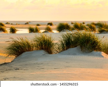 Dunegrass at sunset on Amrum island