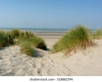 Dunes at the Belgian coast in Blankenberge