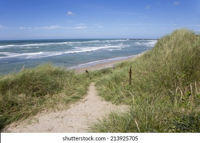Dunes at the coastline of Hirtshals (Denmark)