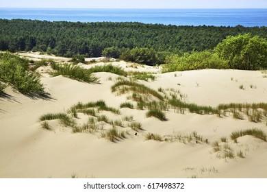 Dunes at Curonian Spit. Kaliningrad Oblast. Russia