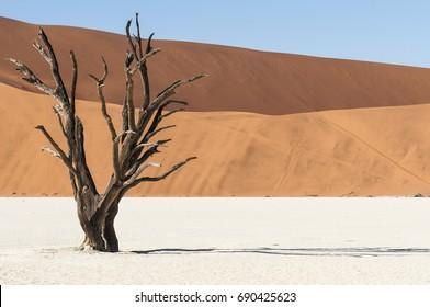 Dunes and dead acacia trees in the Namib desert, Dead Vlei, Sossusvlei, Namibia, Africa./Dead acacia trees and dunes in the Namib desert