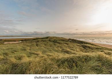 in the dunes of denmark