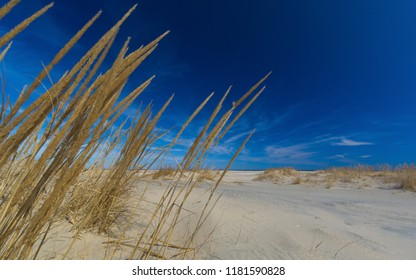Dunes at the end of Sandy Hook in Gateway National Recreation Area in Highlands, New Jersey.