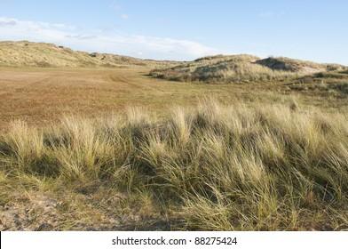 Dunes with European marram grass in Holland