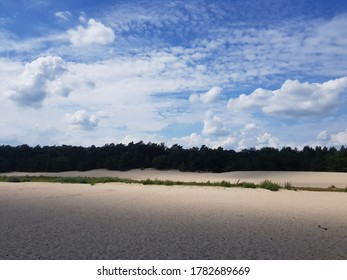Dunes in a forest in summer light