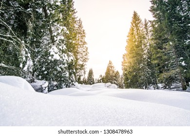 Dunes of fresh snow after a heavy snowfall in the woods. Snowy landscape of the Italian Alps (Altopiano di Asiago)