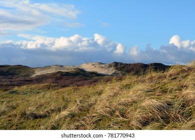 Dunes, grown with Beach Grass, North Sea beach at Texel. Island in Holland.
