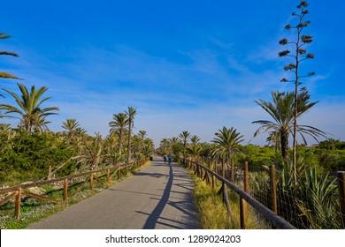 Dunes in Guardamar del Segura of Alicante in Spain