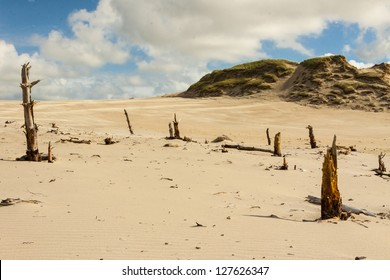 Dunes in Leba - Famous place on Baltic sea.
