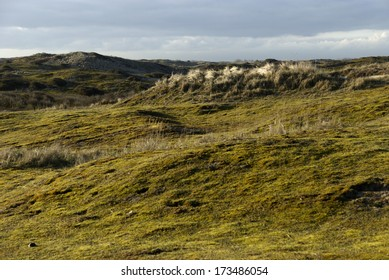 Dunes near Zandvoort, Netherlands