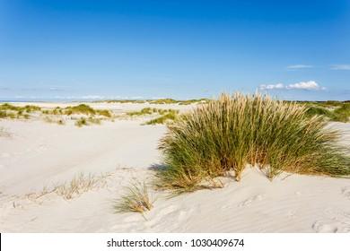 dunes on Amrum, North Frisian Island, Germany
