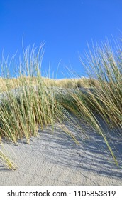 Dunes on beach with marram grass