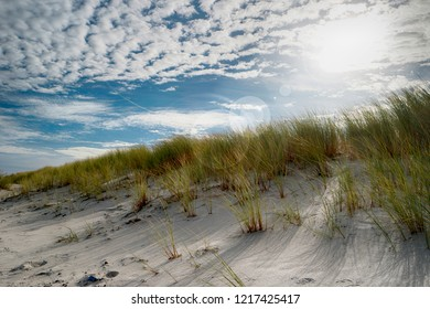 Dunes on Darss in Germany