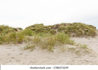 Dunes on the North Sea beach in Germany with copy space