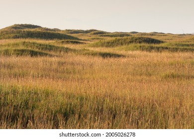 Dunes on Padre Island National Seashore