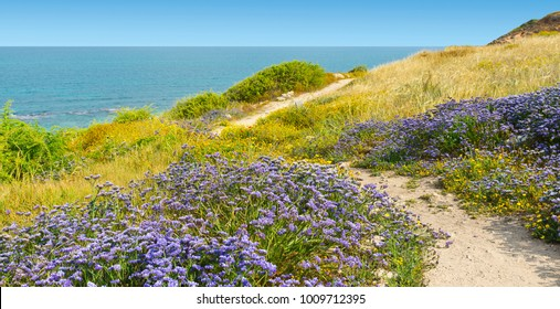 Dunes on the Shore of the Mediterranean Sea in Israel.  Spring flowers in the Israeli Apollonia national park