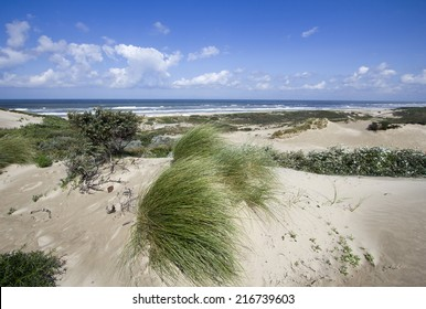Dunes and sea at the North Sea shore in Holland