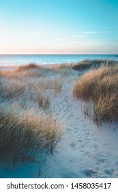 Dunes at sunset on bright blue days at the beach. Dune grass blowing in the summer breeze
