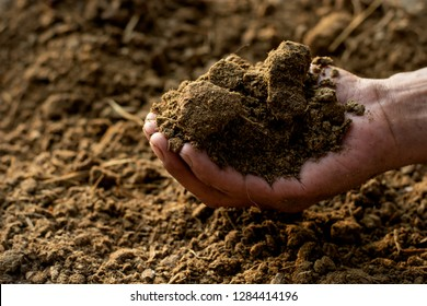 Dung or manure in the hands of agricultural men for cultivation of plants and trees.