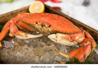 Dungeness Crab Cooked and Placed on Ice