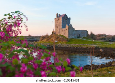 Dunguaire Castle on the bank of ocean bay during sunset. Kinvara, Co. Galway, Ireland