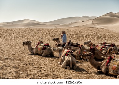 DUNHUANG, CHINA - JUNE 29: Chinese camel driver talkes care of resting Camels at the famous Mingsha sand dunes on June 29, 2012 in Dunhuang located on the historic Silk road in the Gobi desert.