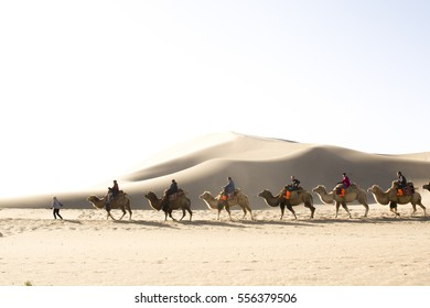 Dunhuang,Gansu, China - October 11, 2014: Group of tourists are riding camels in the desert at Dunhuang City , China.
