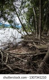 dunkler Zauberwald mit Wurzelwerk an See