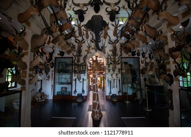 Dunrobin castle, Scotland - June 08, 2018: Heads of varios exotic animals at the museum of hunting trophies