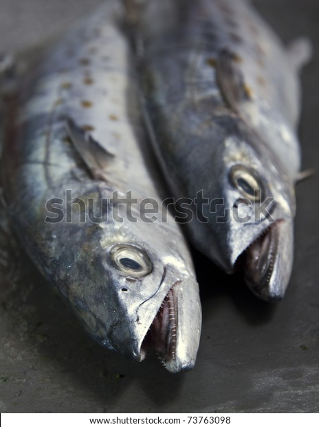 Duo Spanish Mackerel Showing Off Their Stock Photo (Edit Now