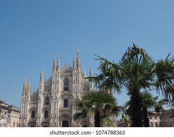 Duomo di Milano (meaning Milan Cathedral) church with palm trees in Milan, Italy