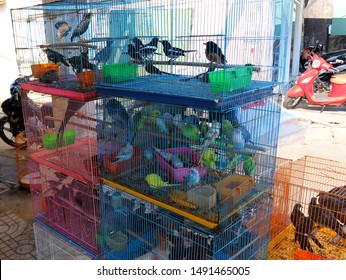 Duong Dong, Phu Quoc island, Vietnam - March 22, 2019: Many decorative birds and songbirds in cages for sale in Vietnam. Animal abuse in Asia