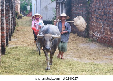 DUONG LAM, VIETNAM- SEPT 29: Vietnamese farmers walks their water buffalo on September 29, 2013 in Duong Lam Village, Vietnam. The Ancient village, 60km West of Hanoi, dates back 1,400 years.