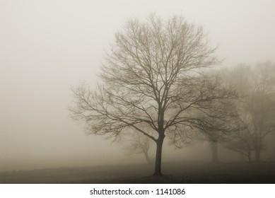 Duotone tree on a foggy morning