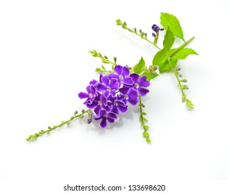 Duranta, Golden dewdrop, Pigeon berry isolated on white background