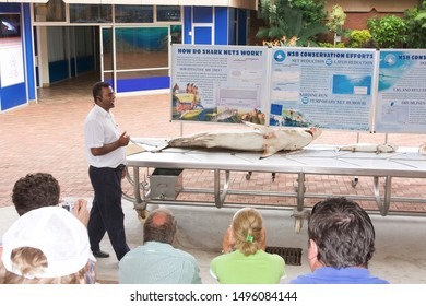 DURBAN, SOUTH AFRICA - FEBRUARY 20, 2008: the National Shark Board in Durban is designed to present the shark species. Each week, a specimen caught at sea is dissected in public.