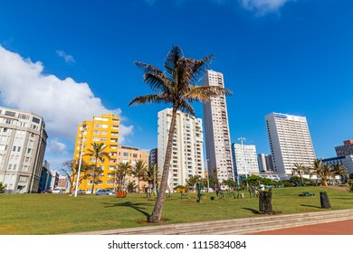 DURBAN, SOUTH AFRICA - MARCH 12 , 2018: Many early morning visitors on grass verge with palm tree against blue cloudy city Durban beachfront cityscape in South Africa
