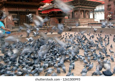 Durbar Square, Katmandu, Nepal - 08 Oct 2014: Pigeons at Durbar square are fed pulses and corn seeds by locals and tourists.
