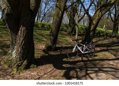 Durham / Great Britain - April 19, 2018: White ladies Specialized hybrid bike with drinks bottle and fashion Basil pannier in a woodland park with trees and daffodils in the background.