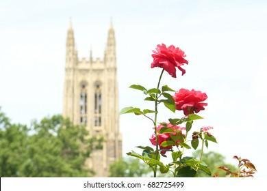 DURHAM - JULY 16: Roses frame Duke Chapel on July 16, 2017 in Durham, North Carolina, USA.
