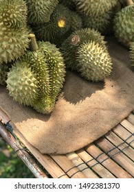 Durian fruits top of the photo. King of fruits. Durian from farm.