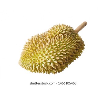 Durian on white isolate background,Ripe durian on white isolated king fruit of Thailand