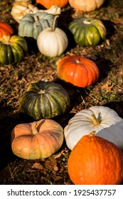 During the fall, festivals take place, pies are made, and homes are decorated - all including pumpkins.   Here the soft glow of the setting sun illuminates the pumpkins with moody lighting.