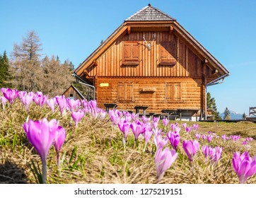 During spring in Austrian alps the flowers florish in the most beautigul and brightes colors. Even the mountain cottages get surrounded by this beautiful fowers.