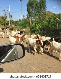 During the trip, meet the goats that the villagers raised.