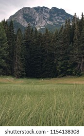 durmitor national park mountains and forest