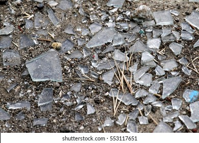 Durty old glass shattered on the ground.