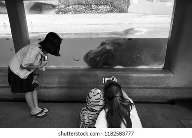 Dusit, Bangkok/Thailand-September 18, 2018: Tourists looking at hippopotamus sleeping in Dusit zoo before the zoo will move to other place.