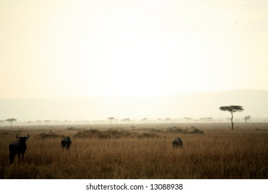 Dusk in the Masai Mara Reserve (Kenya)