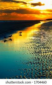 Dusk on Hilton Head beach with birds.